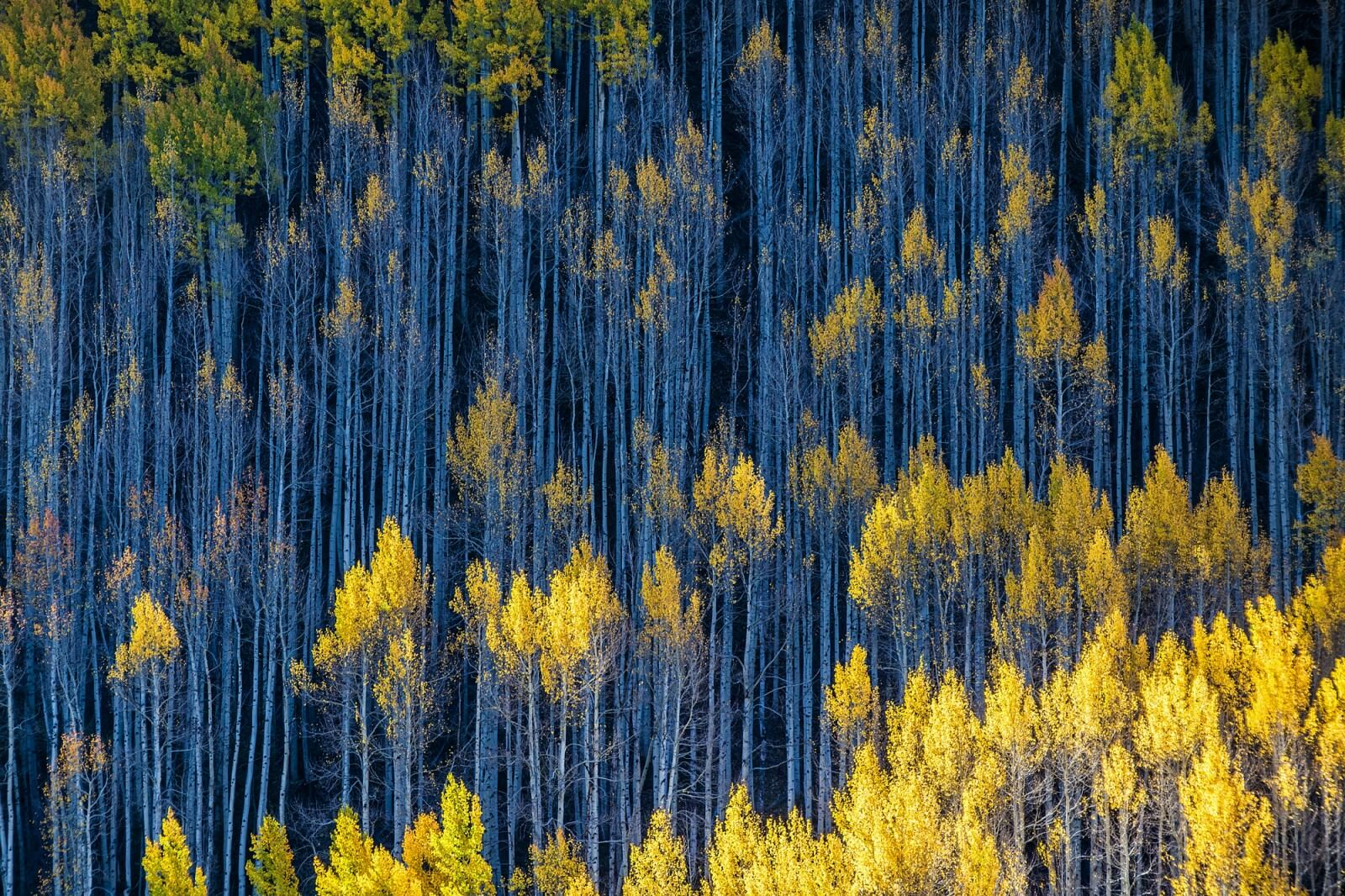Abstractions from Aspens