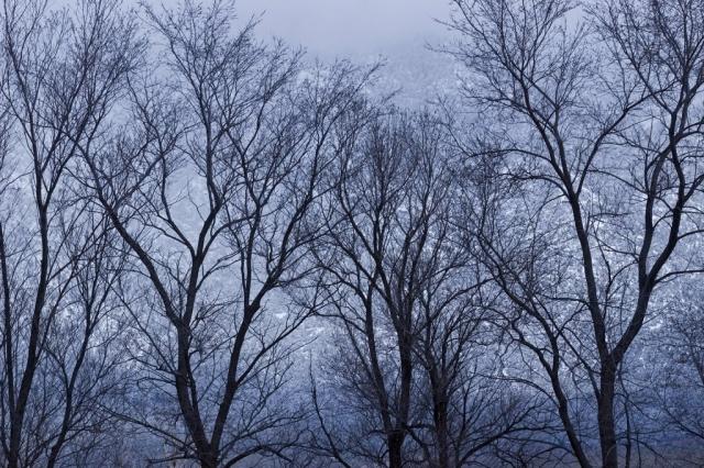 002-Taos Trees
