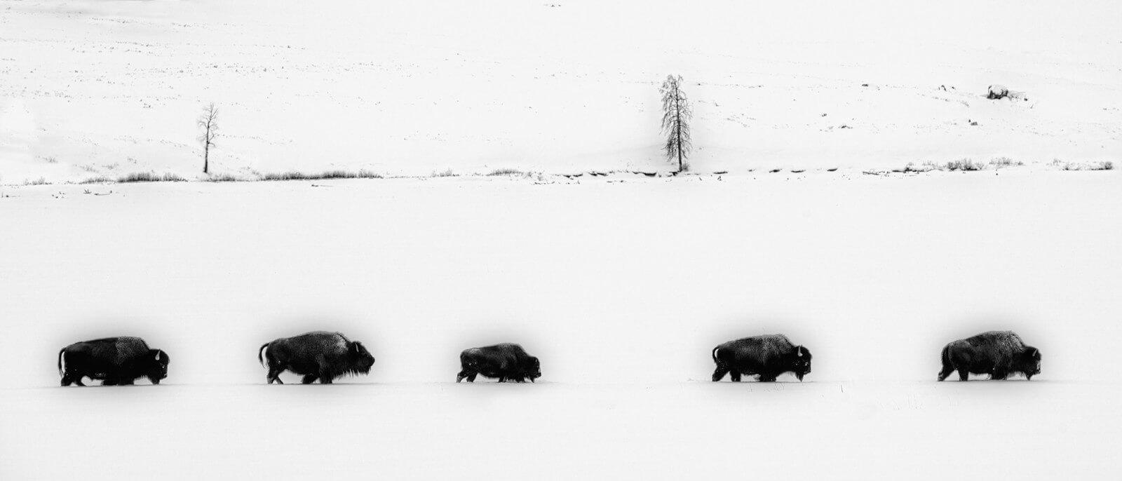 14- 20 X Yellowstone B